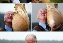 happy onion man