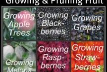 How does your garden grow? / For turning my black thumb into green / by Cindy Skinner