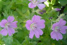 plantas para primavera verano en santiago