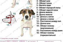 size dog