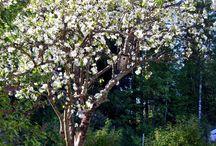 Our vernal garden 2016