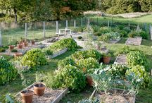 Gardening: Raised Beds / by Debra Collins
