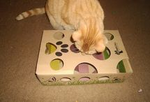 Katten / Kattendungen