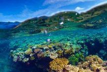 Under vannflaten / Steder jeg ønsker se ved dykking