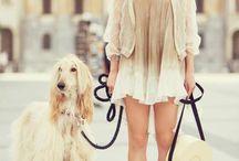 greyhound&sphynx