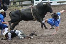 Rodeo photographs New Zealand