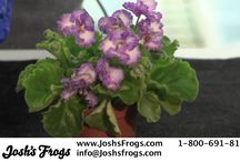 Plant Care / 0 / by Josh's Frogs