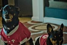 Puparazzi  / Canine Cuties