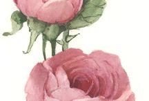 rosa8