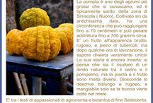 Frutti antichi e preziosi d'Italia