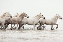 Animals: Horsing around
