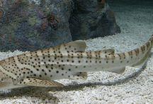 saltwater fishs