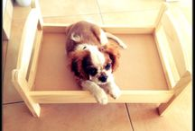 Roxie dog