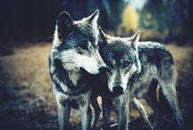 stuff of wolves / by Heidi Hewett