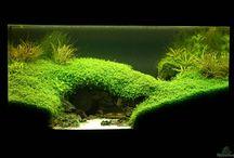 Устройство аквариумных ландшафтов