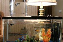 Aquarium fish and its plants
