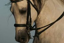 I looove horses