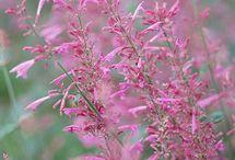Plants/Flowers / by Elisha Morgan