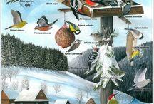 Zvířata v zimě - PL