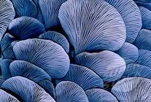 fungi / Pilze