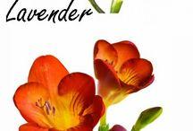 Kwiaty - nazwy , rodzaje itd
