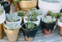 Collections ◘ Plants◘