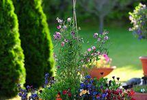bahçe saksı çiçekleri