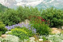 Rock/succulent gardens