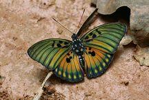 Butterflies / Beautiful butterflies
