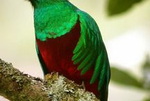Rare vogels