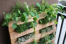 Herb and Veggie garden ideas
