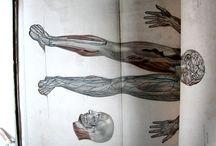 Bourgery, J. M. (Jean Marc), 1797-1849 [Anatomie élémentaire / Bourgery et Jacob] / Arrel de la col·laboració entre Jean Marc Bourgery i l'il·lustrador Nicolas Jacob va néixer una obra cabdal de l'anatomia del segle XIX, l'Atlas d'anatomie humaine et de chirugie, una obra en 8 volums que es va editar entre 1831 i 1854 en forma de facsímils.
