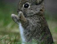 Kaniner!