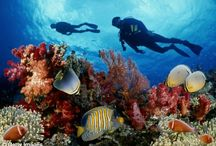 Under Waters / As a avid scuba diver, I love the look of the world from under water. / by Michael Hodson