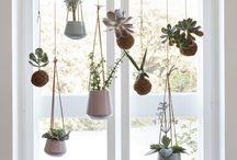 Plants decor