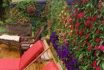 outdoor/garden / by Lindsey Deems