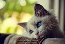 Gatos tristes / Imágenes de gatos tristes
