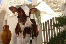 Agriturismo Puglia - Farmhouses Apulia