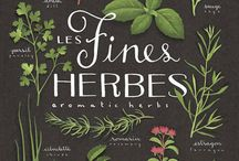Herbs & Spices / by Rebel Foster