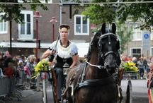 Evenementen in Zeeland / Als gast van minicamping de Visser zijn deze evenementen zeker een bezoek waard