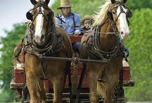 Amish Life / by Martha Ball