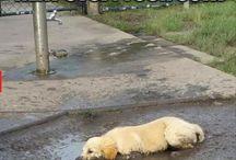 dogs & mud
