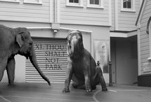 Surrealism - animals