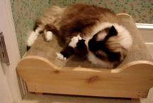 Cardboard Cat Scratchers