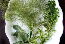 Freezing Herbs/spices