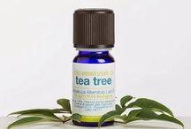 Olio di albero da tè