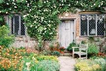 Love my garden