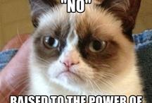 Grumpy Cat pearlers!