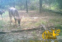 2016 Oak Creek 2 Trail Cam photos / The bucks of Oak Creek 2 caught on our Spypoint Trail Cams.