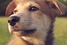 可愛いワンコ^ ^♡ / YouTubeより ワンコ癒し 子犬 犬